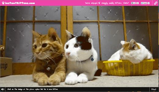 キュン死必至!ねこのアニメーションGIFを次から次に見ることができるサイト「Instant Kittens」