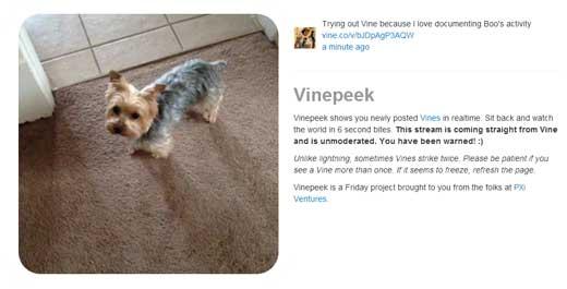 Vineの投稿動画を次々に再生してくれるWEBサービス「Vinepeek」