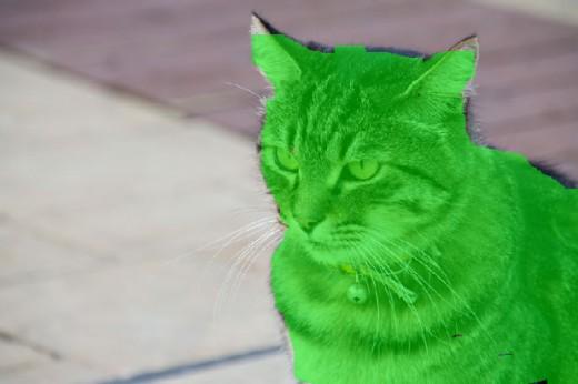 緑のブラシで被写体を塗る