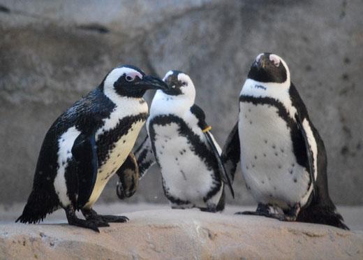 ペンギンアップデート2.0に関する情報まとめ